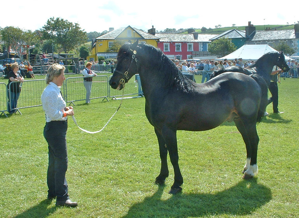 Julie Evans of the Haighmore Stud at the Running of the stallions.