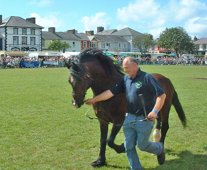 Dafydd Ty Coch showing Fronarth Welsh Lion, Running of the stallions, Aberaeron Festival, 2007.